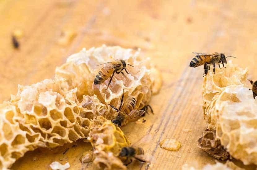 La cera de abejas tiene propiedades curativas, antiinflamatorias y antimicrobianas