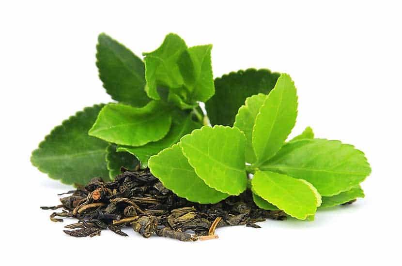 Las hojas de té verde sin fermentar son ricas en antioxidantes