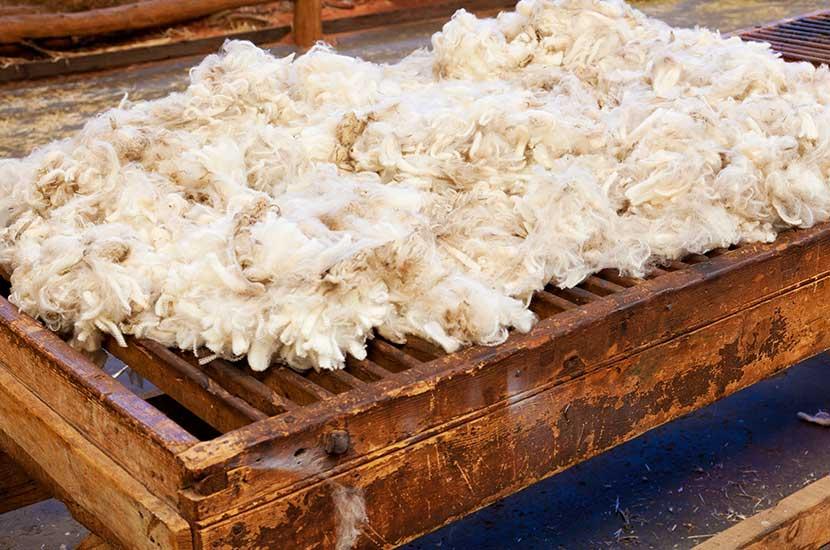 La lana es un derivado de la lana