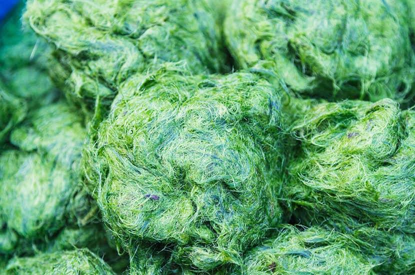 Las algas son una excelente fuente de proteínas
