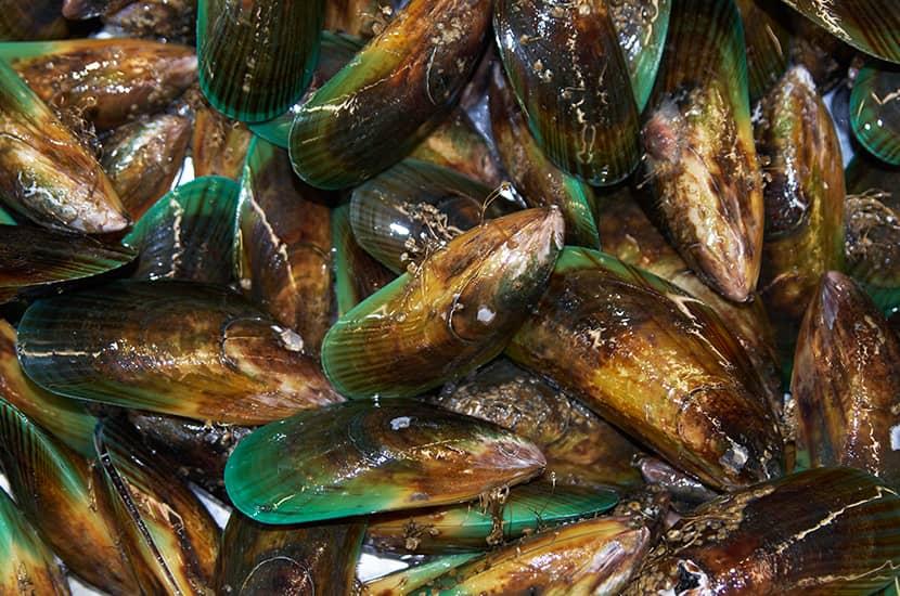 Los mejillones de labios verdes son ricos en vitaminas B