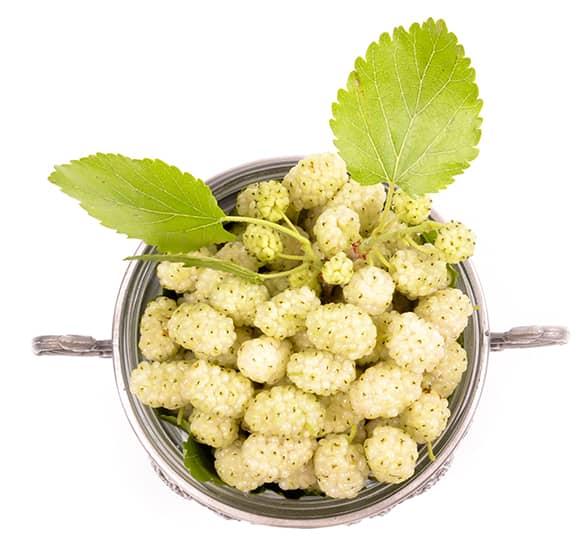 El extracto de morera blanca es rico en vitaminas, minerales y antioxidantes