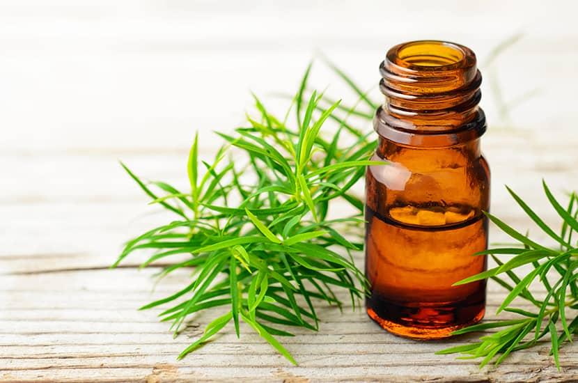 El aceite de árbol de té es un aceite esencial con múltiples propiedades para la piel